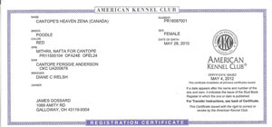 American Kennel Club-AKC Registered